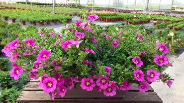 Furlan Floricoltura