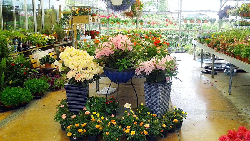Galeria Garden snc