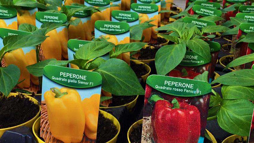 Garden Shop Pia Floricoltura