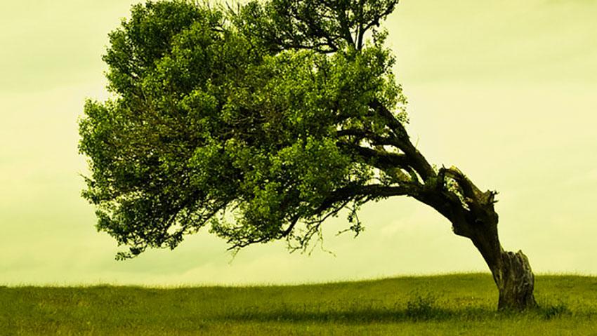Il verde di Ale