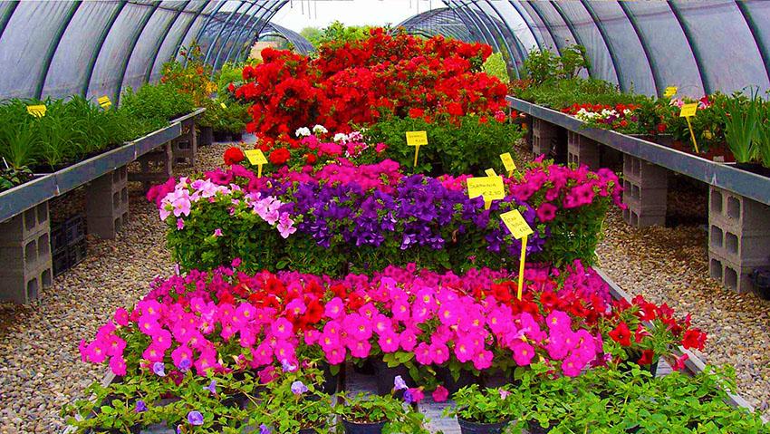Aao vivai vendita di piante e fiori for Vendita piante e fiori