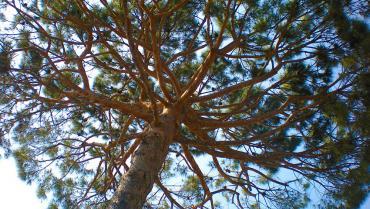 Soluzione alberi
