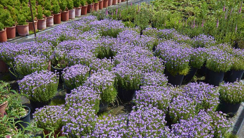 Vivai elisa produzione di piante da esterno for Piante acquisto