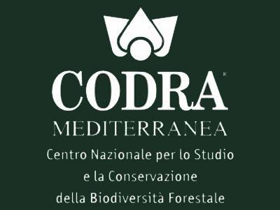 Codra Mediterranea srl