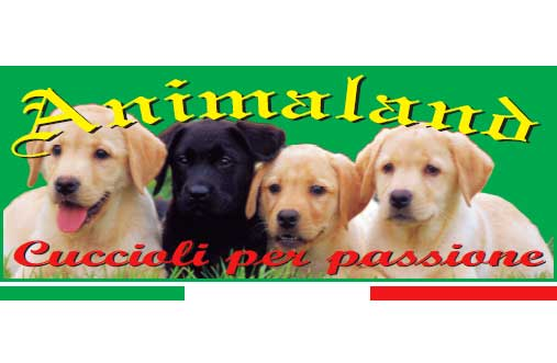 Animaland di Novello Romina